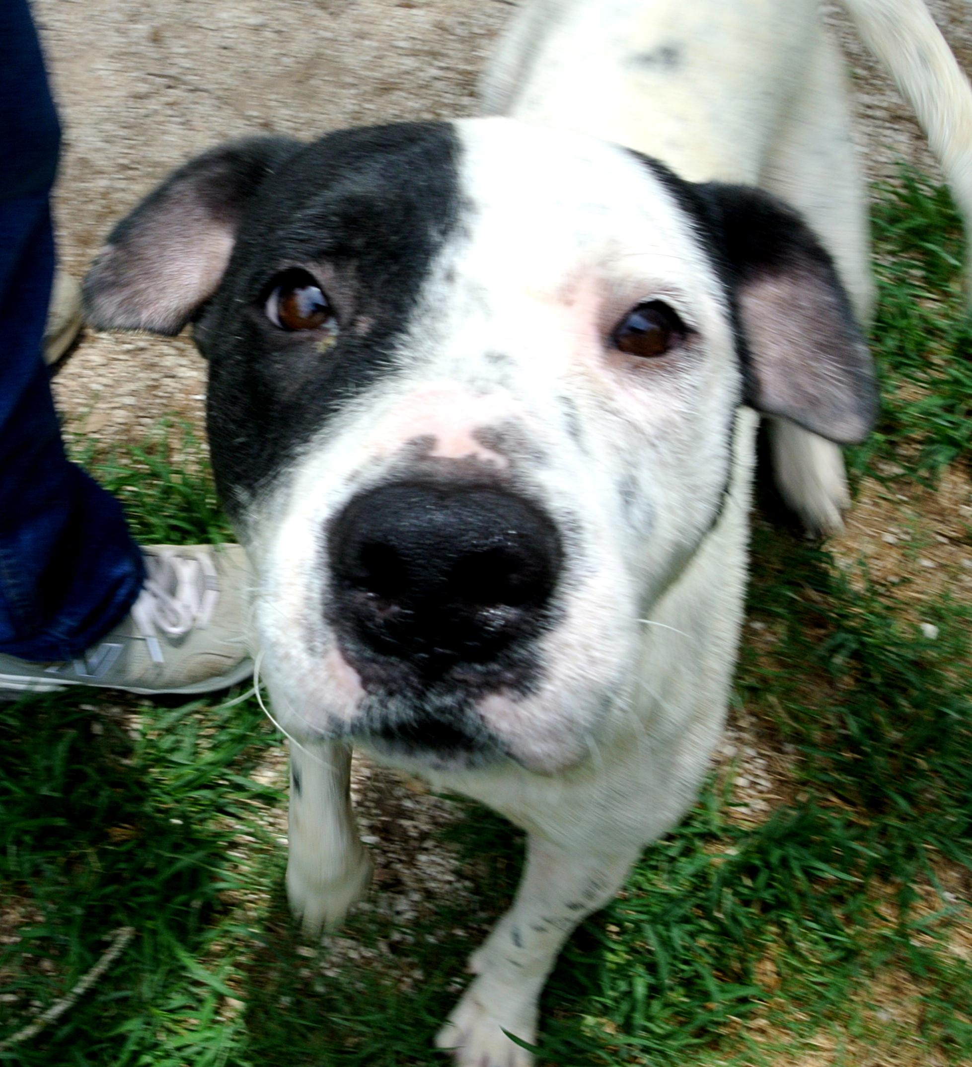 Dog Rescue Spot Houston